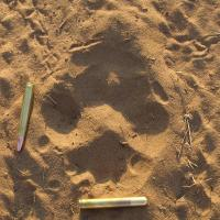 Tracking Wild Animals